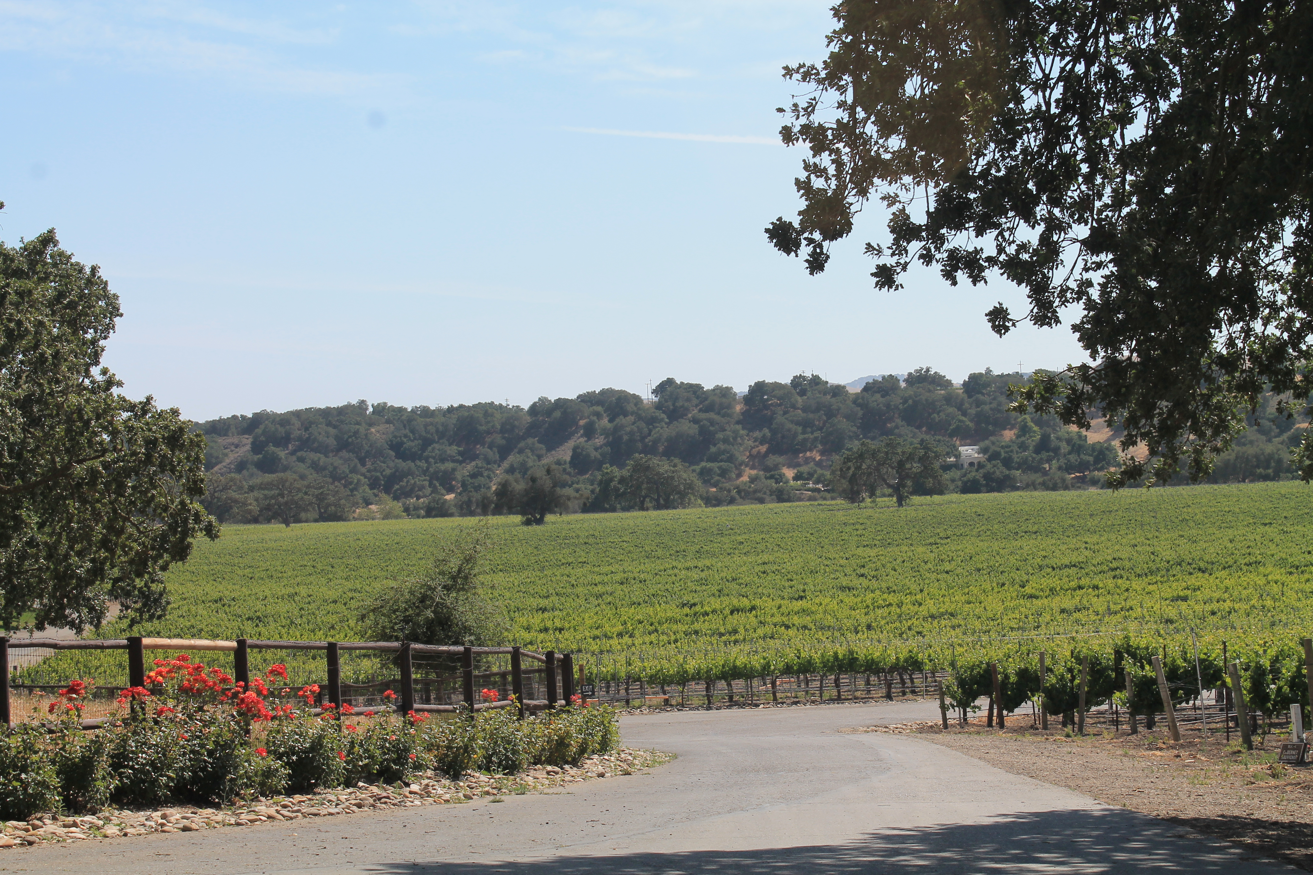 Koehler Winery's vines are over 30 years old