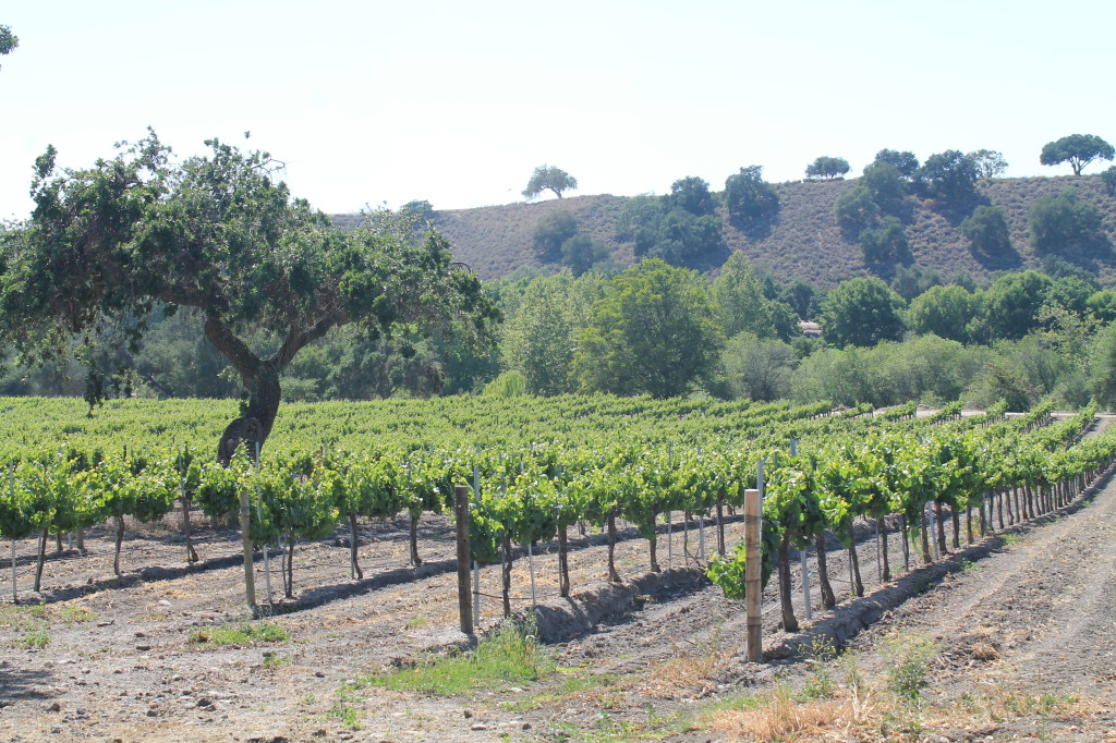 A peaceful, easy feeling surrounds you at Koehler Winery in Foxen Canyon