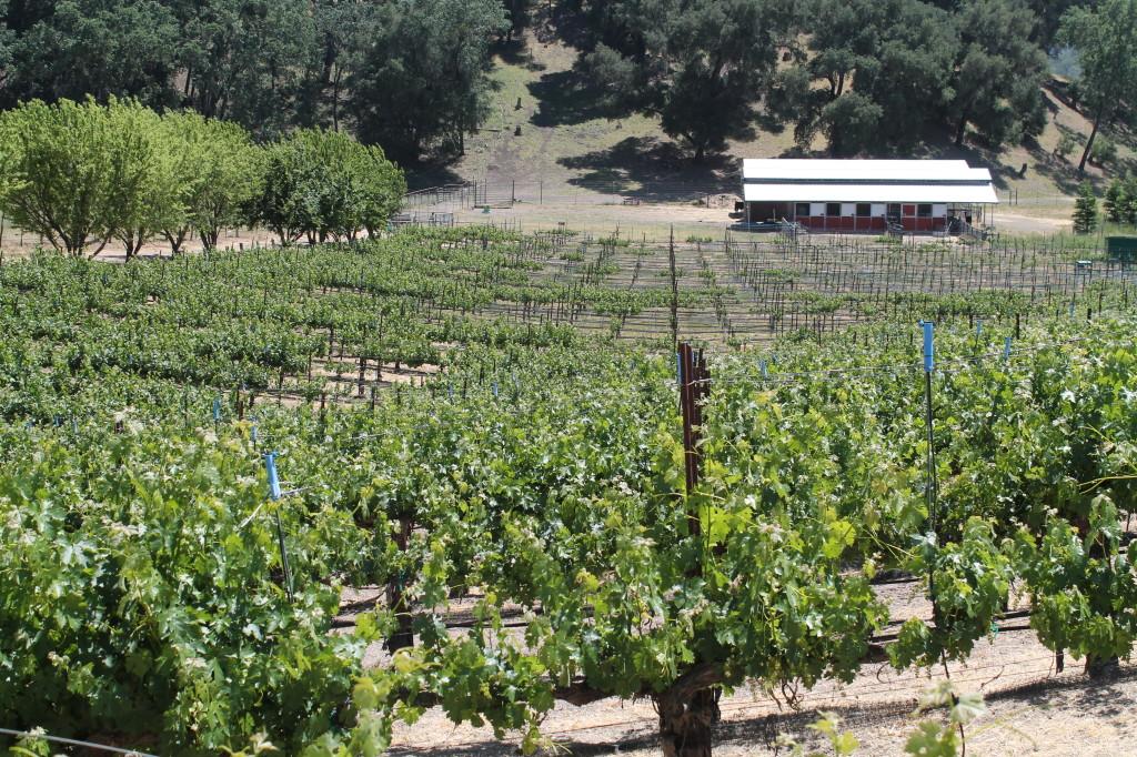 Oso Libre Winery ~ Paso Robles